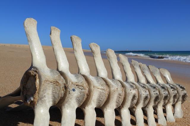 Portugal faro beach, travel vacation.