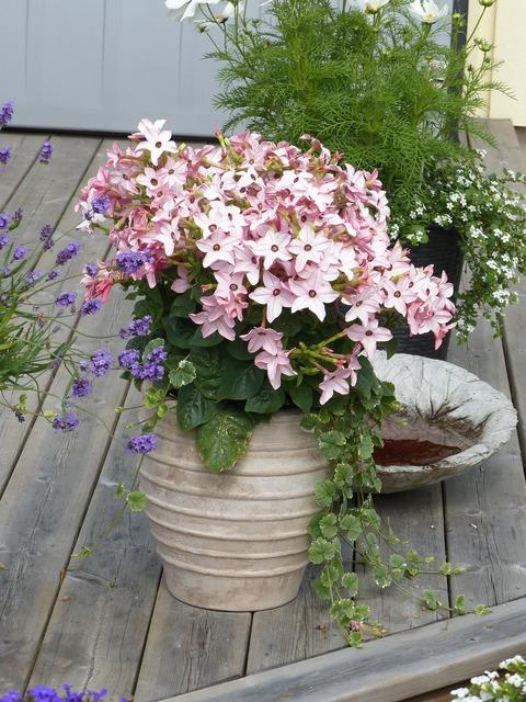 Pot plant flowers, nature landscapes.