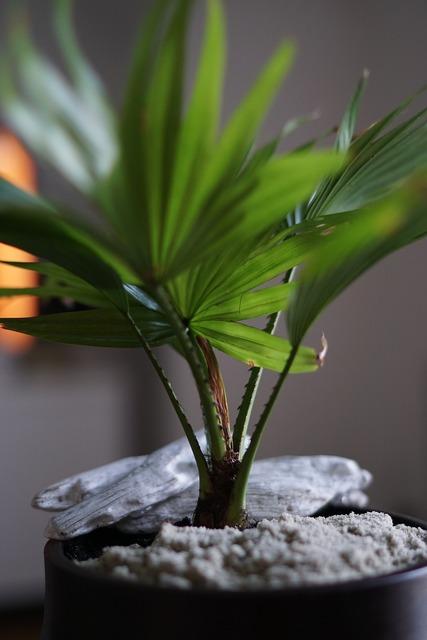 Potted plant decoration plant, nature landscapes.