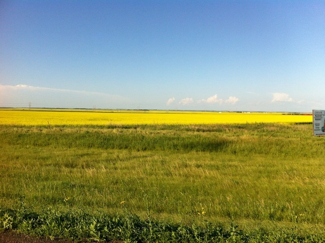 Prairie countryside canola, nature landscapes.
