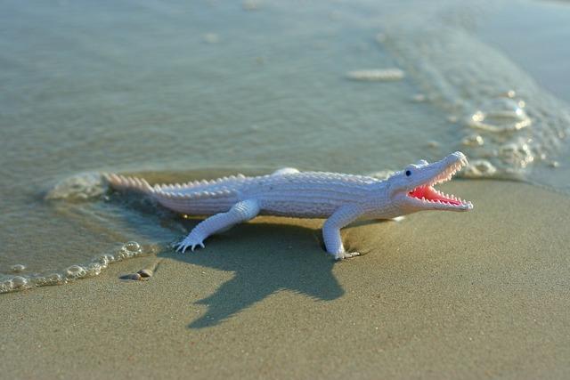 Prop alligator toy, travel vacation.