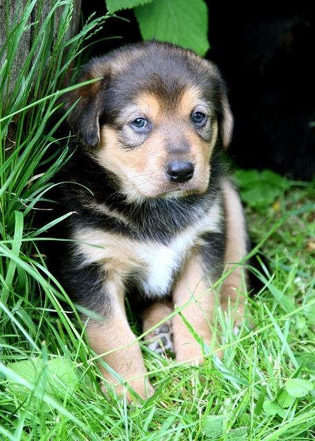 Puppy dog baby, animals.
