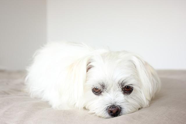 Puppy dog canine, animals.