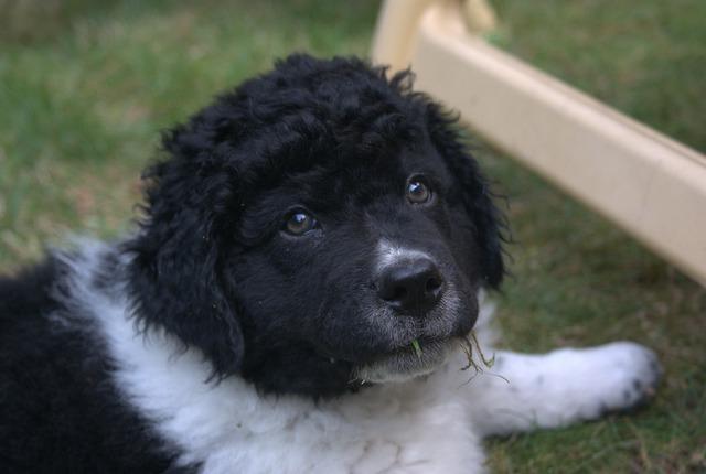 Puppy dog dogs, animals.