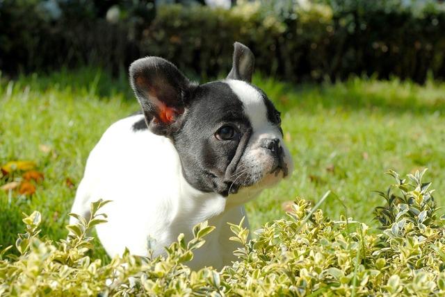 Puppy dog pet, animals.