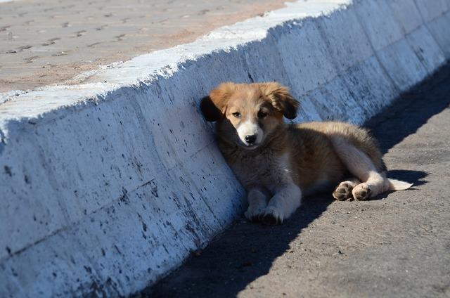 Puppy dog roadside, animals.