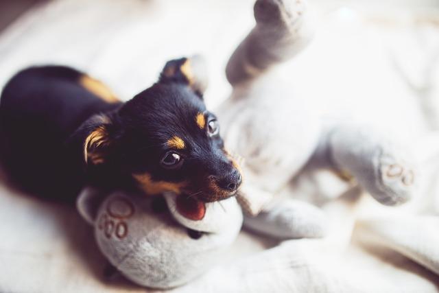 Puppy dog small, animals.