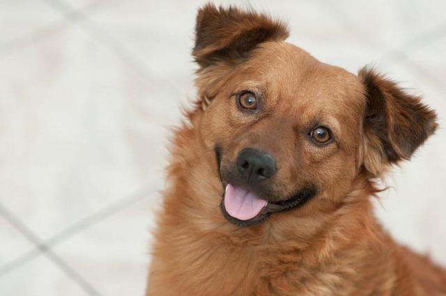 Puppy dog smiling dog, animals.