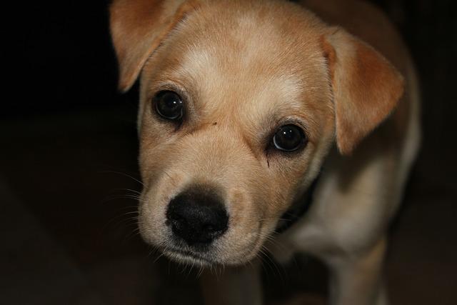 Puppy sad cute, emotions.