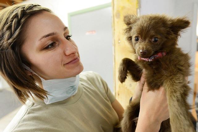 Puppy vet veterinarian, animals.