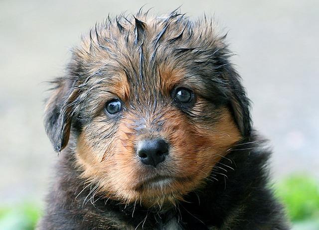 Puppy wet dog, animals.