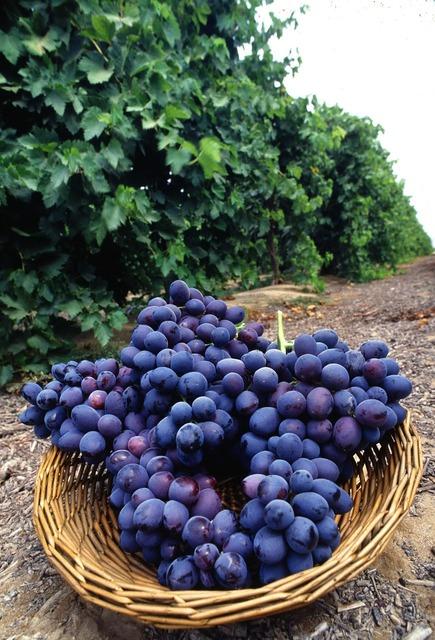Purple fresh fruit, food drink.