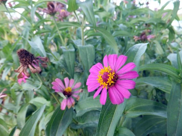 Purple green flowers, nature landscapes.