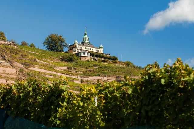 Radebeul spitz house vineyard, nature landscapes.