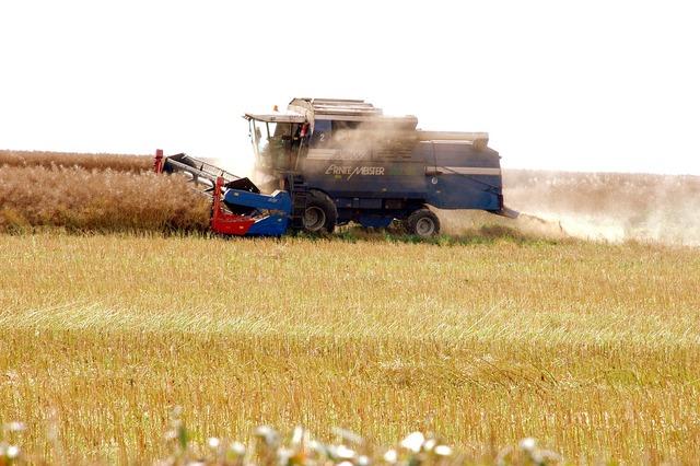 Rapsernte combine harvester agriculture.