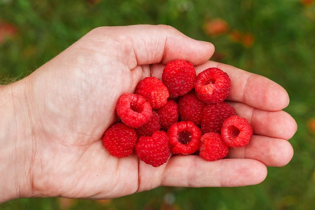 Raspberry berry vitamins, health medical.