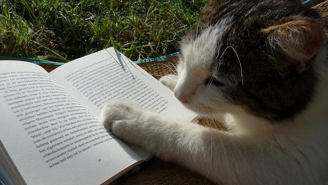 Reading book cat, animals.