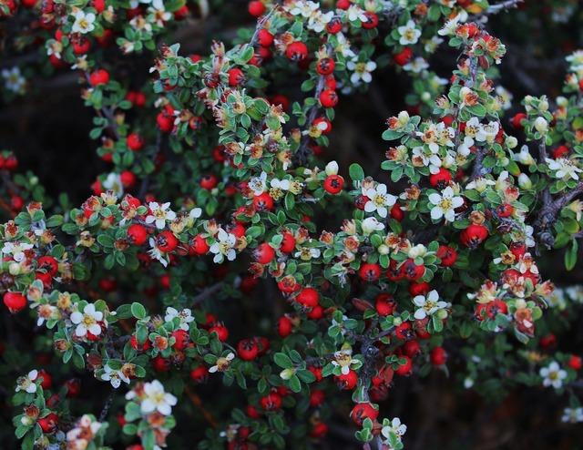 Red berries plant berries berry bush.