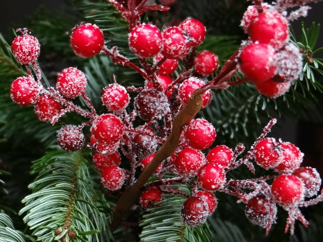 Red christmas berries traditionally fir.