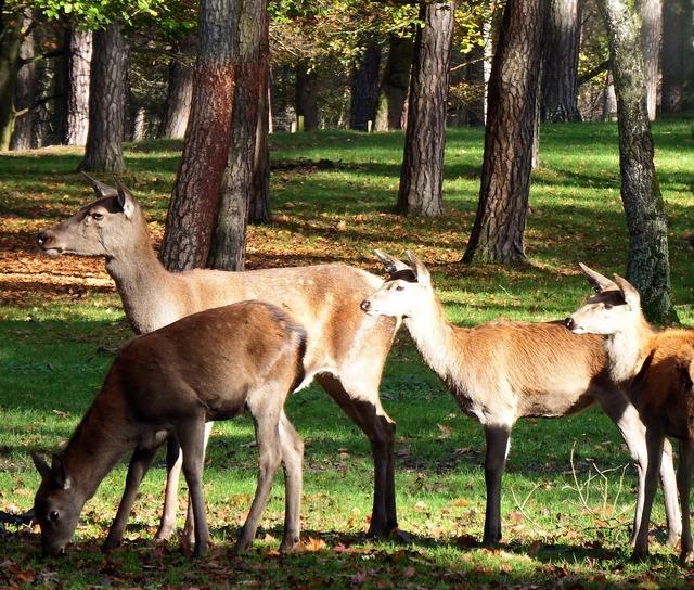 Red deer group red deer november, nature landscapes.