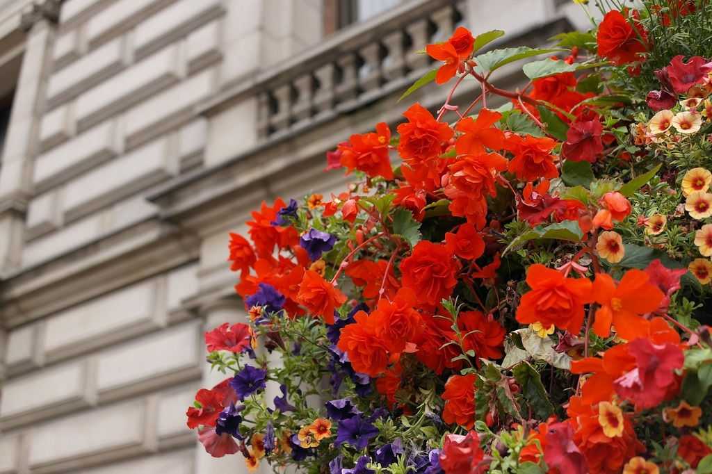 Red flowers landscape flowers and building, nature landscapes.