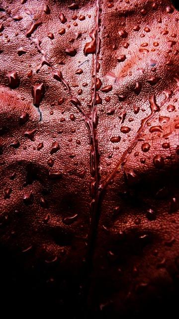 Red leaf water, nature landscapes.