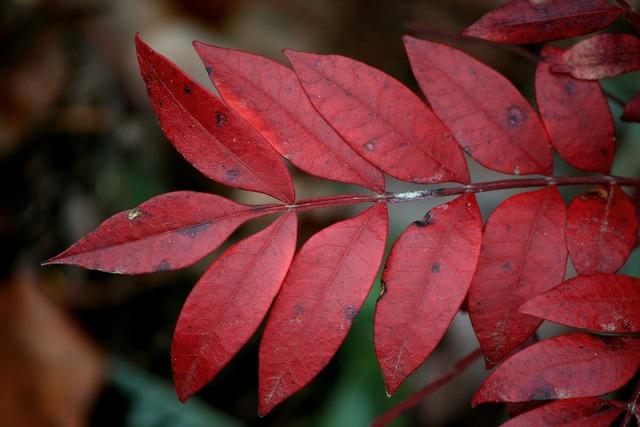 Red leaves plant natural, nature landscapes.