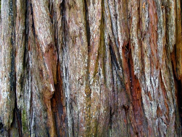 Red wood bark tree, nature landscapes.
