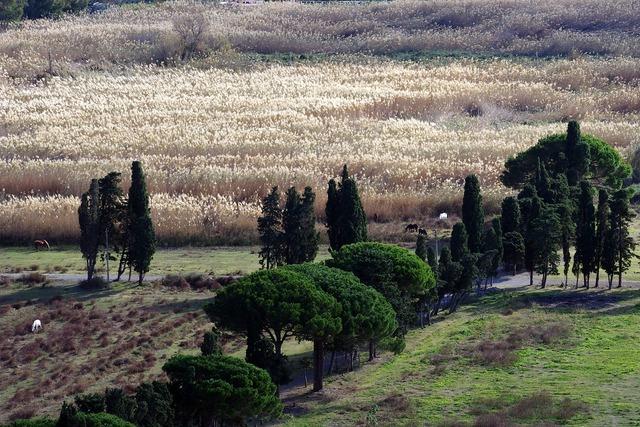 Reeds calabria campaign.