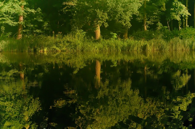 Reflection tree water, nature landscapes.