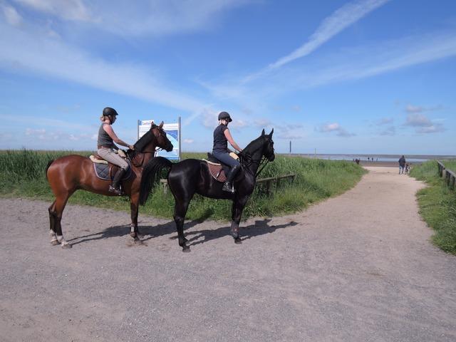 Reiter horses north sea, travel vacation.