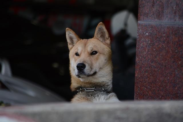 Republic of korea puppy dog, animals.