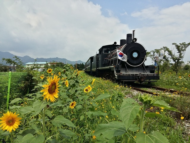 Republic of korea steam locomotive train, transportation traffic.