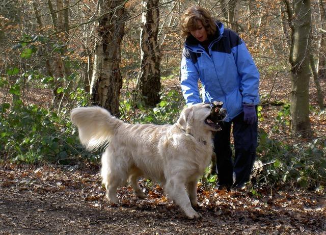 Retriever labrador dog, animals.