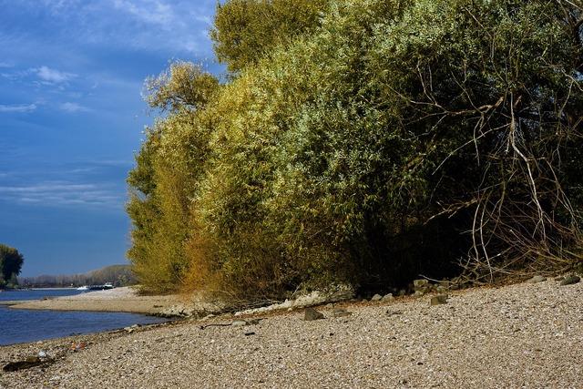 Rhine river beach, travel vacation.
