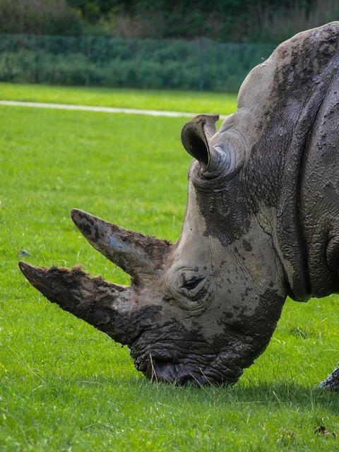 Rhino animals wildlife park.
