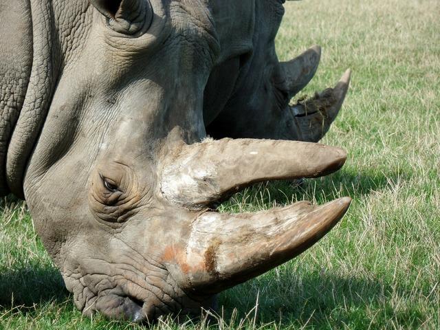 Rhino park knuth borg.