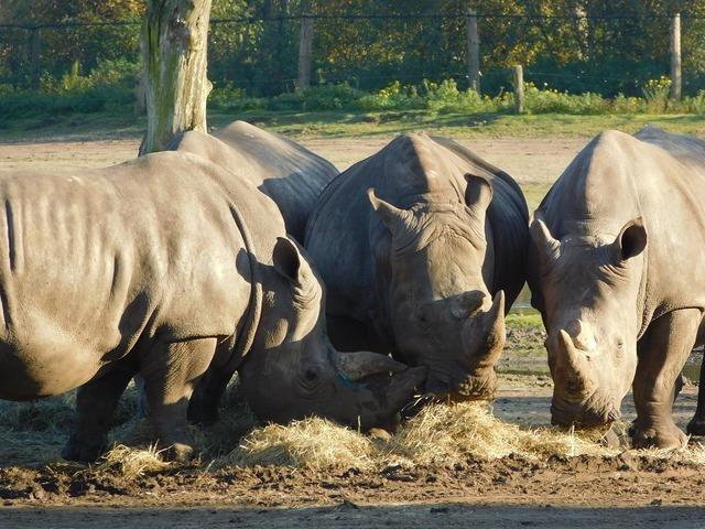 Rhino wild animal wildlife park.