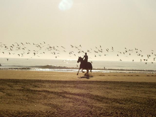 Ride horse beach, travel vacation.