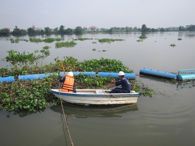 River boat water hyacinth.