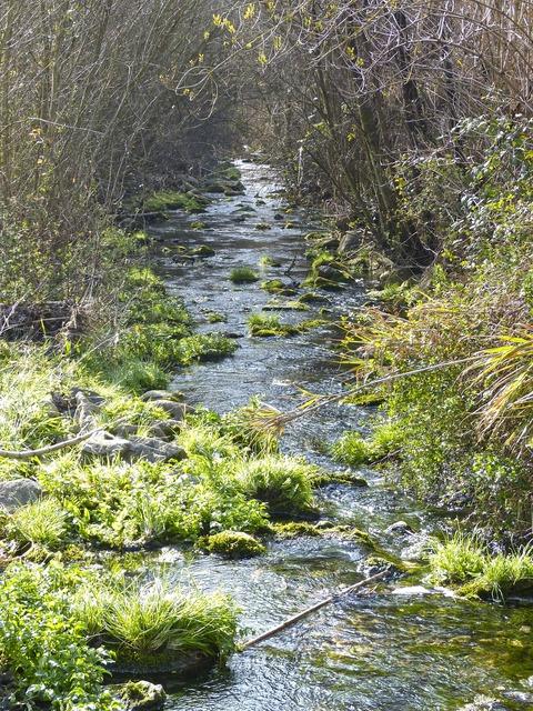 River brook siurana, science technology.
