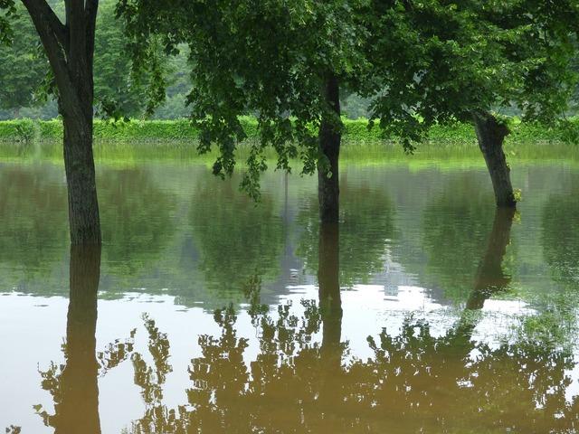 River floods trees.