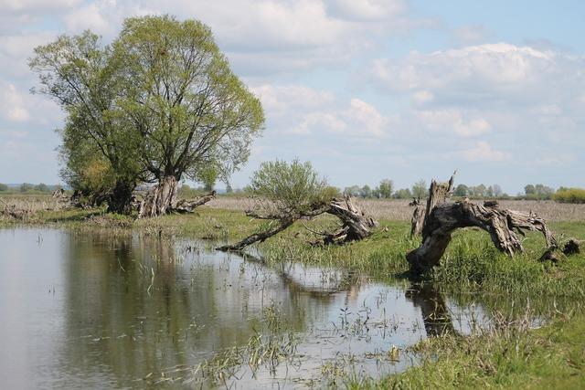 River warta countryside.