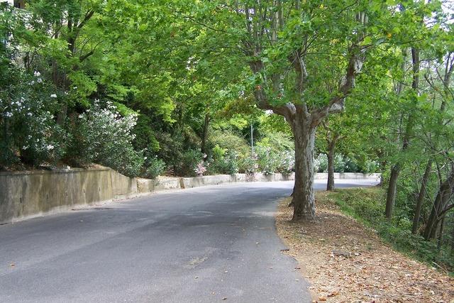 Road avenue trees, transportation traffic.