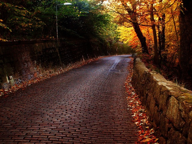 Road bricks trees, transportation traffic.
