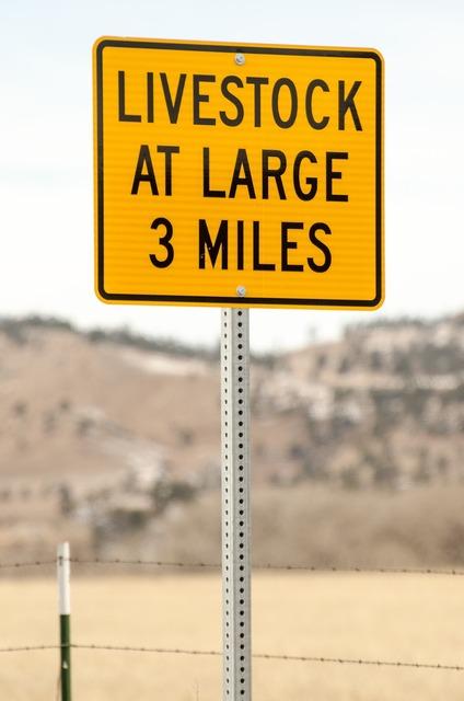 Road sign sign livestock at large, transportation traffic.