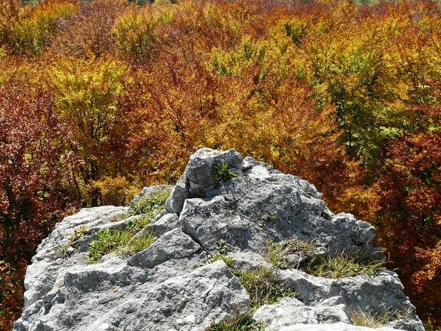 Rock stone autumn forest.