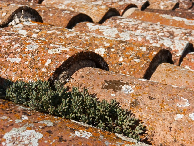 Roof texas lichens, nature landscapes.