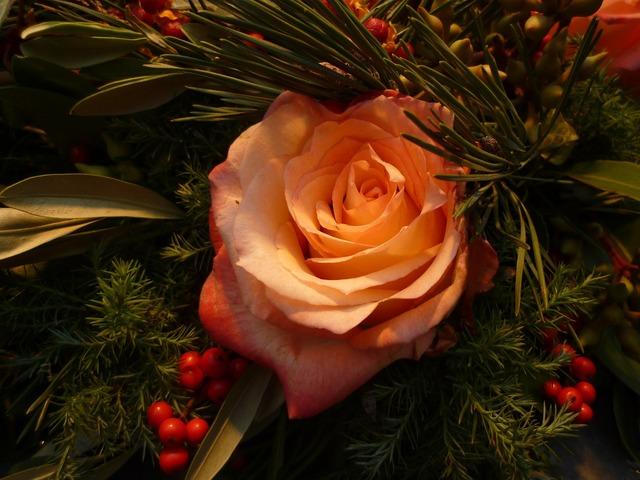 Rose christmas bouquets, nature landscapes.