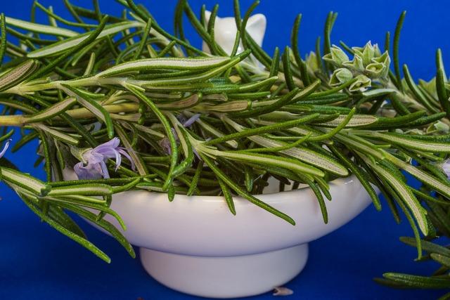 Rosemary culinary herbs herbs.